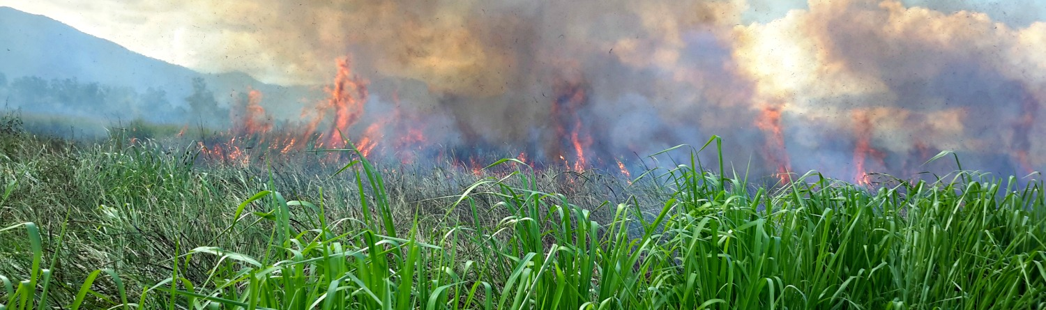 An example of a planned burn program being undertaken in extreme fuel loads