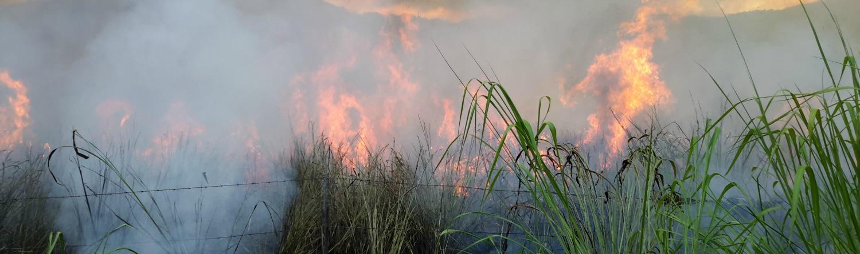 A planned burn progressing through tropical grass