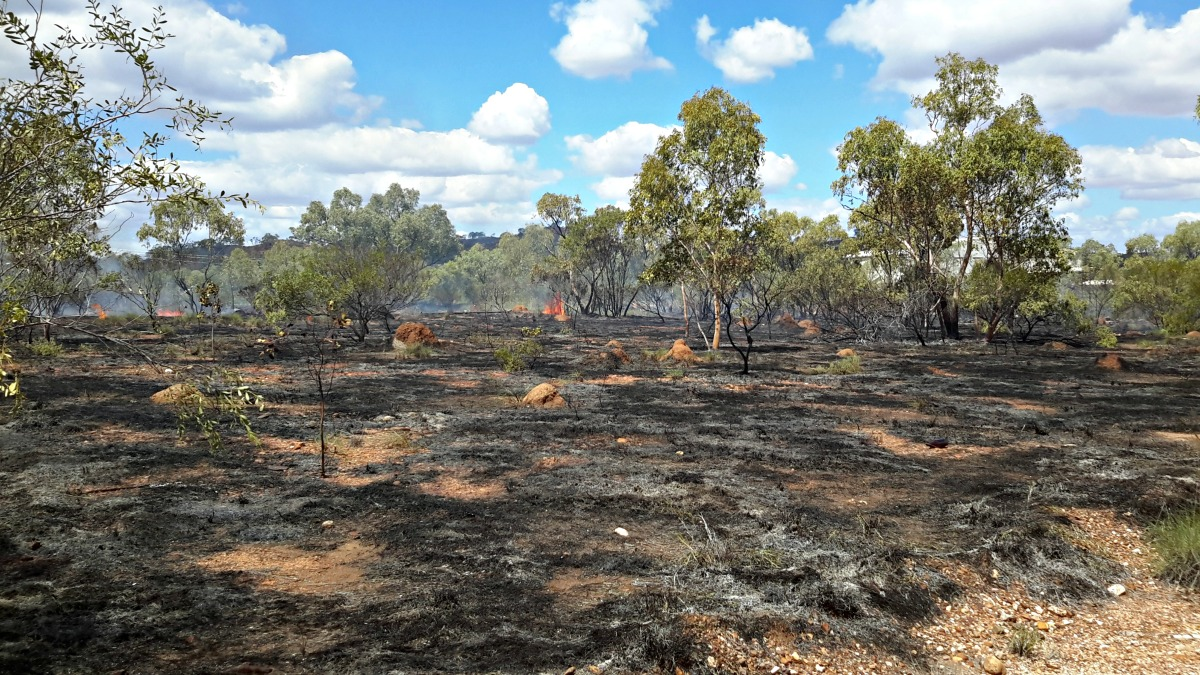 Just 6 hours after rainfall burns achieved a 90% burnt pattern
