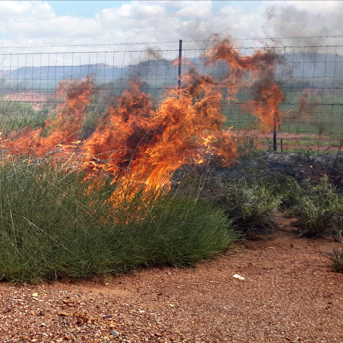 Spinifex burning 7 hours after rain
