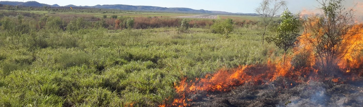 Example of a low-intensity controlled burn in vegetation as part of a bushfire mitigation program
