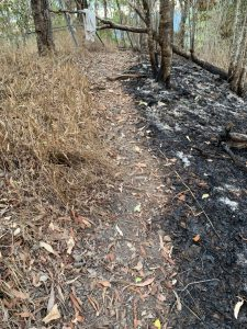 Burnt area and unburnt areas divided by walking track less than 1 foot wide.