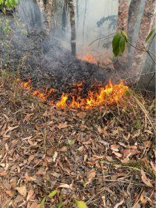 Bushfire less than 20cm high trickling downhill, extinguishing against rainforest vegetation
